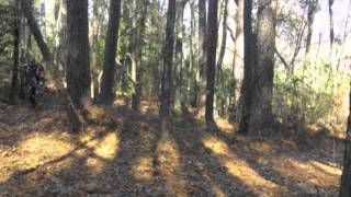 Sasquatch Cult Presents: Predator Deception Brown