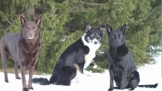 Mina hundar 2010
