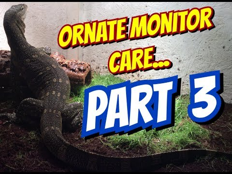 Ornate Monitor Care Part 3