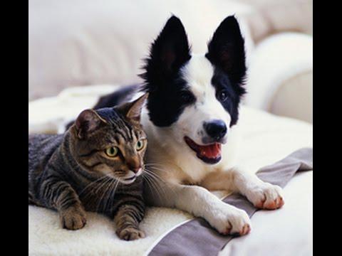 кошки собаки видео приколы смотреть онлайн