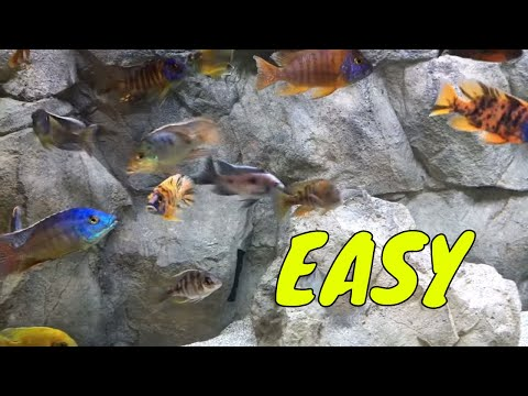 HOW TO SETUP AN AFRICAN CICHLID TANK