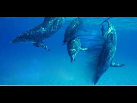 See here what a 4 day / 3 night dolphin experience is like: