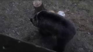 Самый смешной Медведь и яшик c водкой
