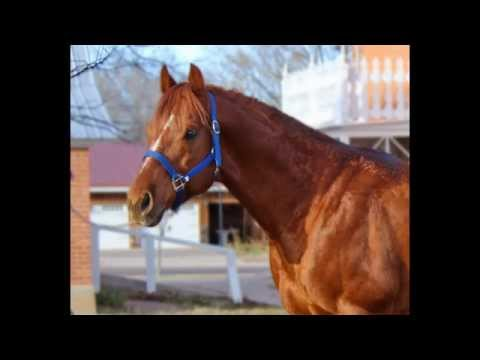 Stallion For Sale, At Stud.
