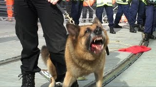 Police Dogs Set on Anti-Fascists at EDL Manchester Protest