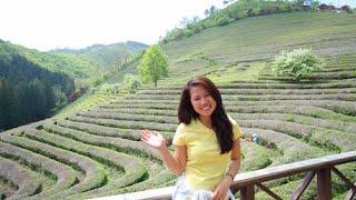 보성녹차밭 Boseong Green Tea Plantation