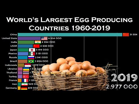 World's Largest Egg Producing Countries 1960-2019 | Top 15 Egg Producing Countries 1960-2019
