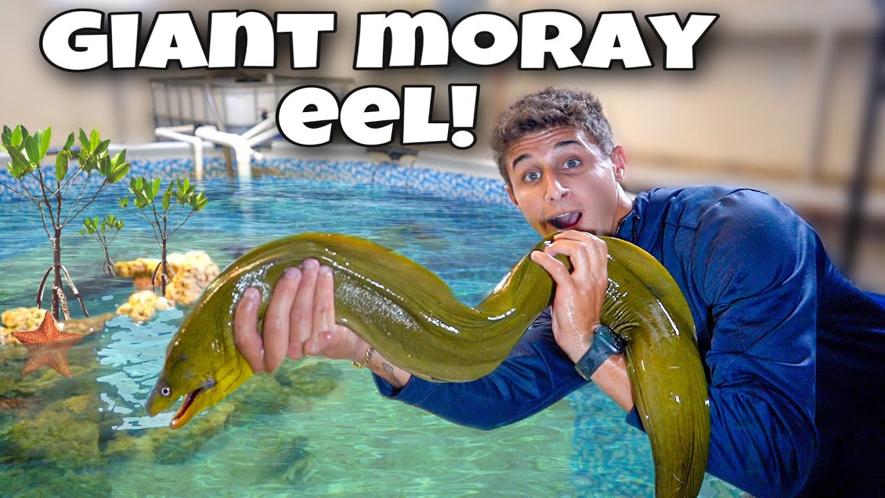 Catching GIANT GREEN MORAY EEL For My SALTWATER POND!!