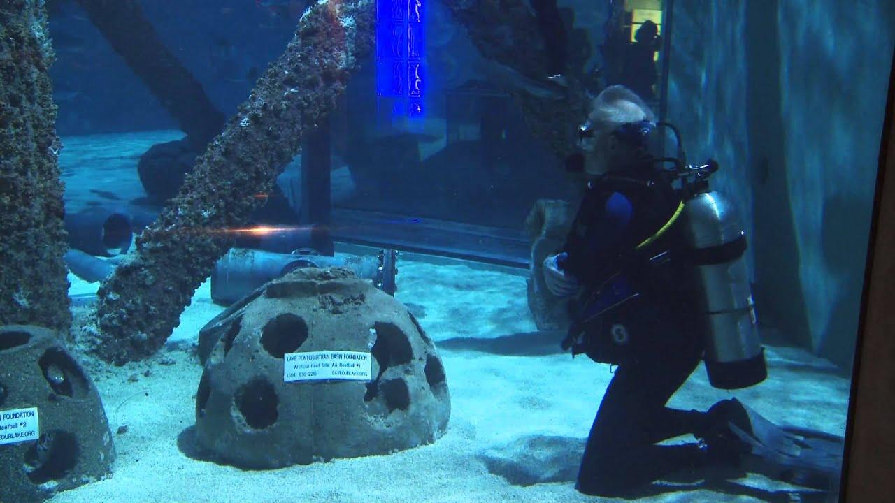 Dive In At Audubon Aquarium The Real Wild Animals Of New