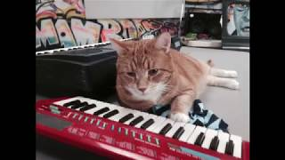 Keyboard Cat when it's winter out there