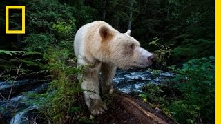National Geographic Live! - Capturing the Spirit Bear | Nat Geo Live thumbnail