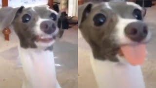 Những con vật hài hước nhất thế giới #1 | Yêu Pets
