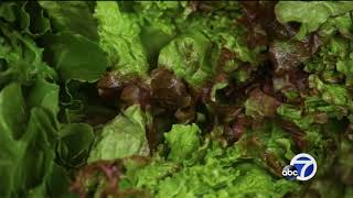 ROMAINE RECALL: Salad enthusiasts skipping on Romaine amid E. coli outbreak