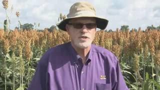Harvesting soon to begin in Louisiana