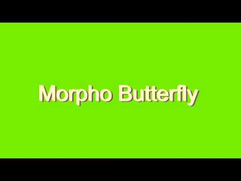 How to Pronounce Morpho Butterfly