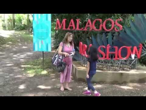 A day at the Malagos Garden Resort, April 23, 2017