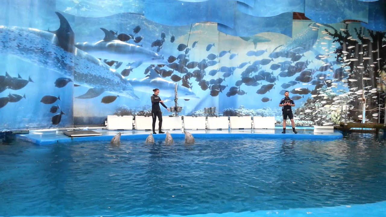 Barcelona Zoo Dolphin Show A Youtube