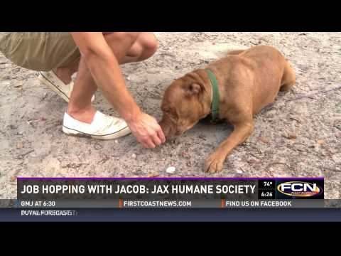 Job Hopping with Jacob: Jacksonville Humane Society