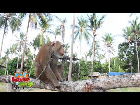 Pet Lover by Jerhigh : ศูนย์ลิงสมุย
