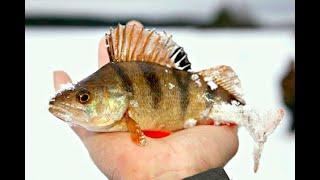 Рыбалка в Карелии. Окунь на Мормышку и Блесну. Незнакомое лесное озеро. Термосы Арктика на Рыбалке