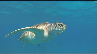 Caribbean Adventure - Part 3 - Jammin Catamaran, turtles, shipwreck, snorkeling, Barbados