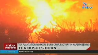 Tea plantation workers burn crop, factory in Kapsumbeiywo