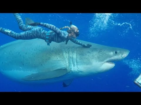 diver-swims-with-record-breaking-20-foot-great-white-shark-|-worlds-biggest