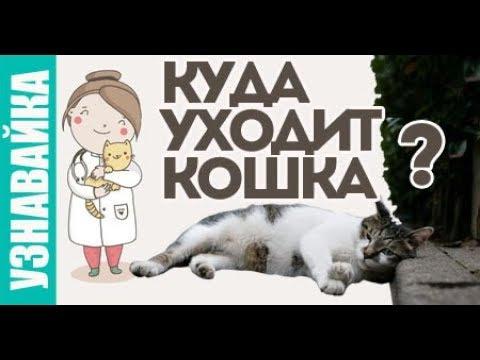 Если кошка болеет что делать