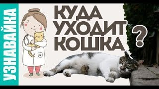 Когда кошка болеет она уходит... Узнавайка