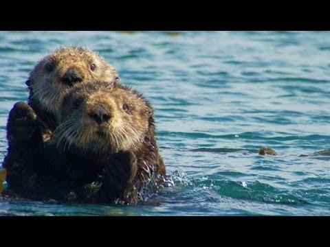 Help Clear Sea Otter Cove