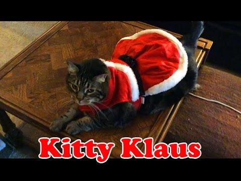 Fat Cat In A Santa Suit   Kitty Klaus