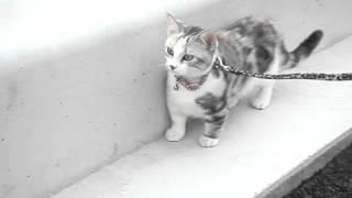 【閲覧注意】かわいい子猫が突然事故に遭遇