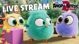 The Angry Birds Movie 2 | Live Stream Hatchlings