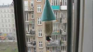 Bird Feeder Made Of Recycled Plastic Bottle - Facebook.com/happycitybirds