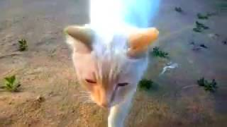 Щенок пристает к кошке.