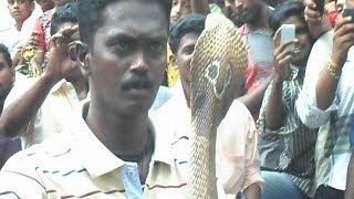 vava suresh catching cobra(m ,10 yers old) from muttumon kumbanad