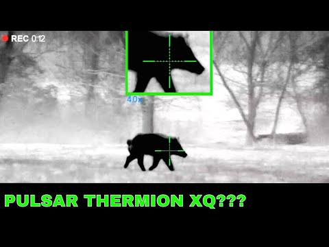 Pulsar Thermion XP50 Thermal Hunting   Thermion XQ38 and XQ50 News