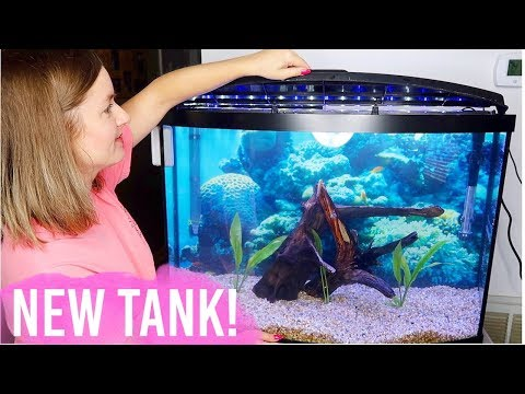 NEW Setting Up My Tropical Fish Tank