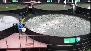 陆基循环水产喂魚飼料 Land-Based Recirculating Aquaculture Systems (RAS)
