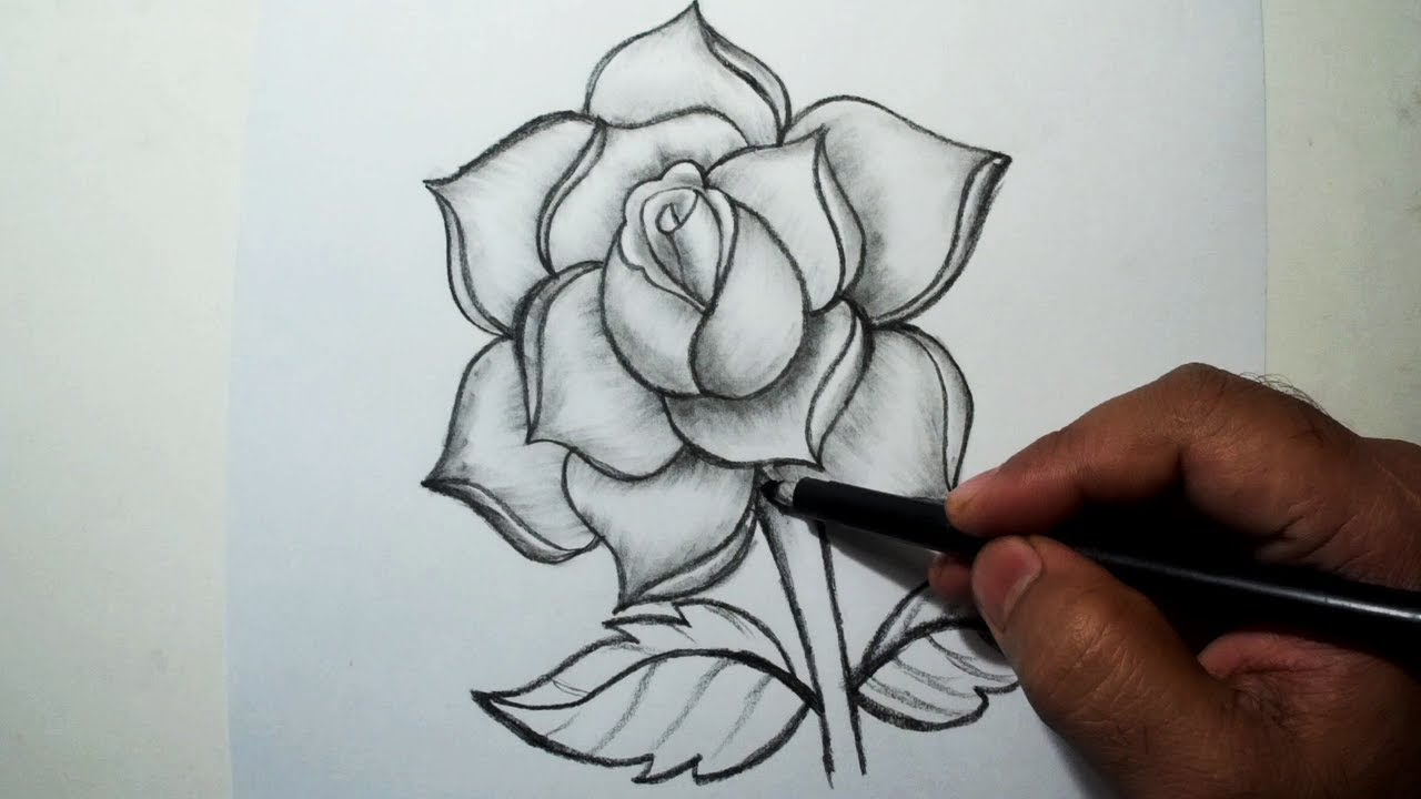 How to Draw A Rose || Easy Pencil Drawing - YouTube