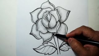 pencil easy rose drawing draw
