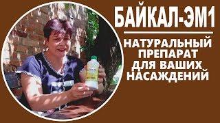 Байкал ЭМ 1 применение на огороде  Советы садоводам  и огородникам