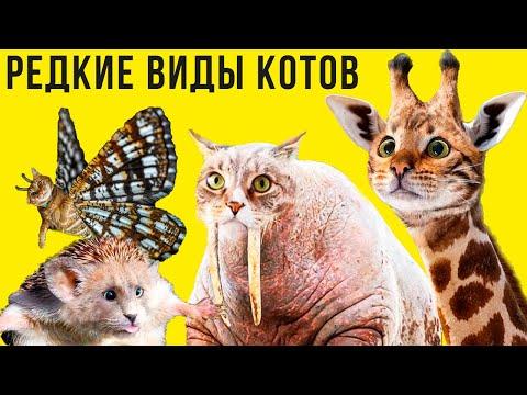 Редкие виды котов)) Приколы с котами | Мемозг #389