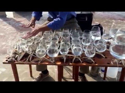 Star wars theme song played on Wine glasses