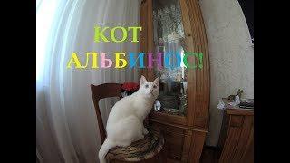 коты. кот альбинос.кот.котенок.