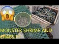 How to Catch Shrimp with Cast Net - How to Catch Monster Blue Crabs - Catching Shrimp with Cast Net
