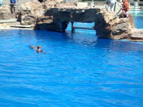 Lady falls in Seaworld pool!