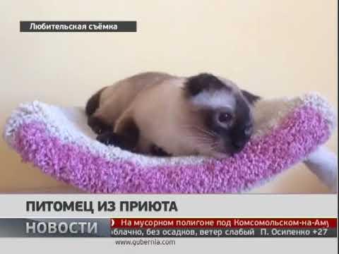 Выставка 'Четыре лапы два уха' прошла в Хабаровске. Новости. 17/07/2018. GuberniaTV