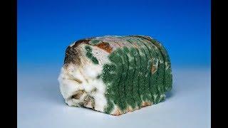 ★Никогда не ешь хлеб с плесенью. Не обрезай его, а выбрасывай. Вот что может произойти.