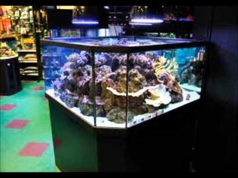 Cool saltwater aquariums youtube for Coolest saltwater aquarium fish